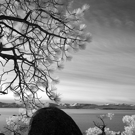 Tree and rock, Lake Tahoe (infrared)